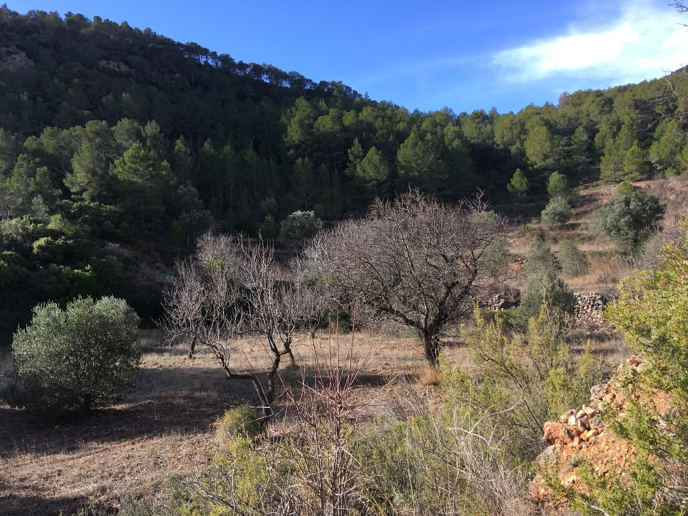Rural plot in Pinell de Brai (El). Finca con calma