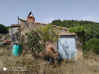 Rural plot in Carrer major, 3. Finca en producció i casetat