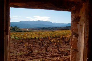 Landgut in Carrer major, 3. Magnifica finca de vinya