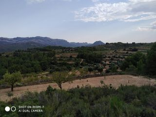 Rural plot in Carrer major, 1. Finca d'oliveres i ametllers bot