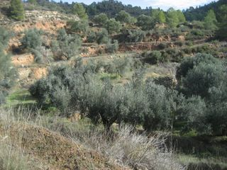 Rural plot in Vinebre. Regadiu