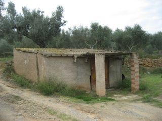 Rural plot in Riba-roja d´Ebre. Olivers de regadiu i caseta
