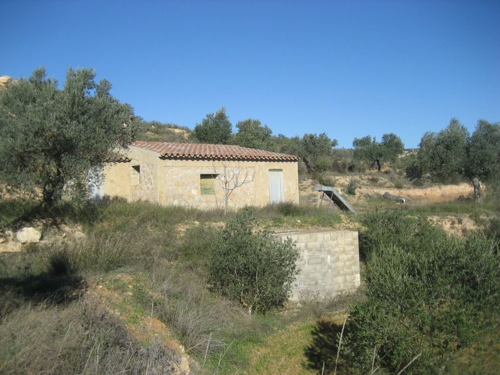 Rural plot in Riba-roja d´Ebre. Olivers de regadiu i casetes