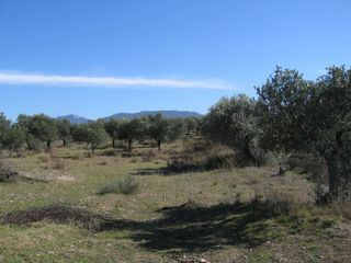 Rural plot in T-734,. Finca rústica en el priorat