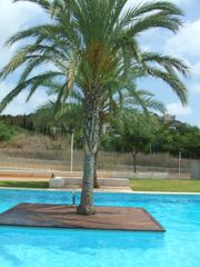 Rent Apartment in Calle el rall, 8. Apartamento en torre bellver