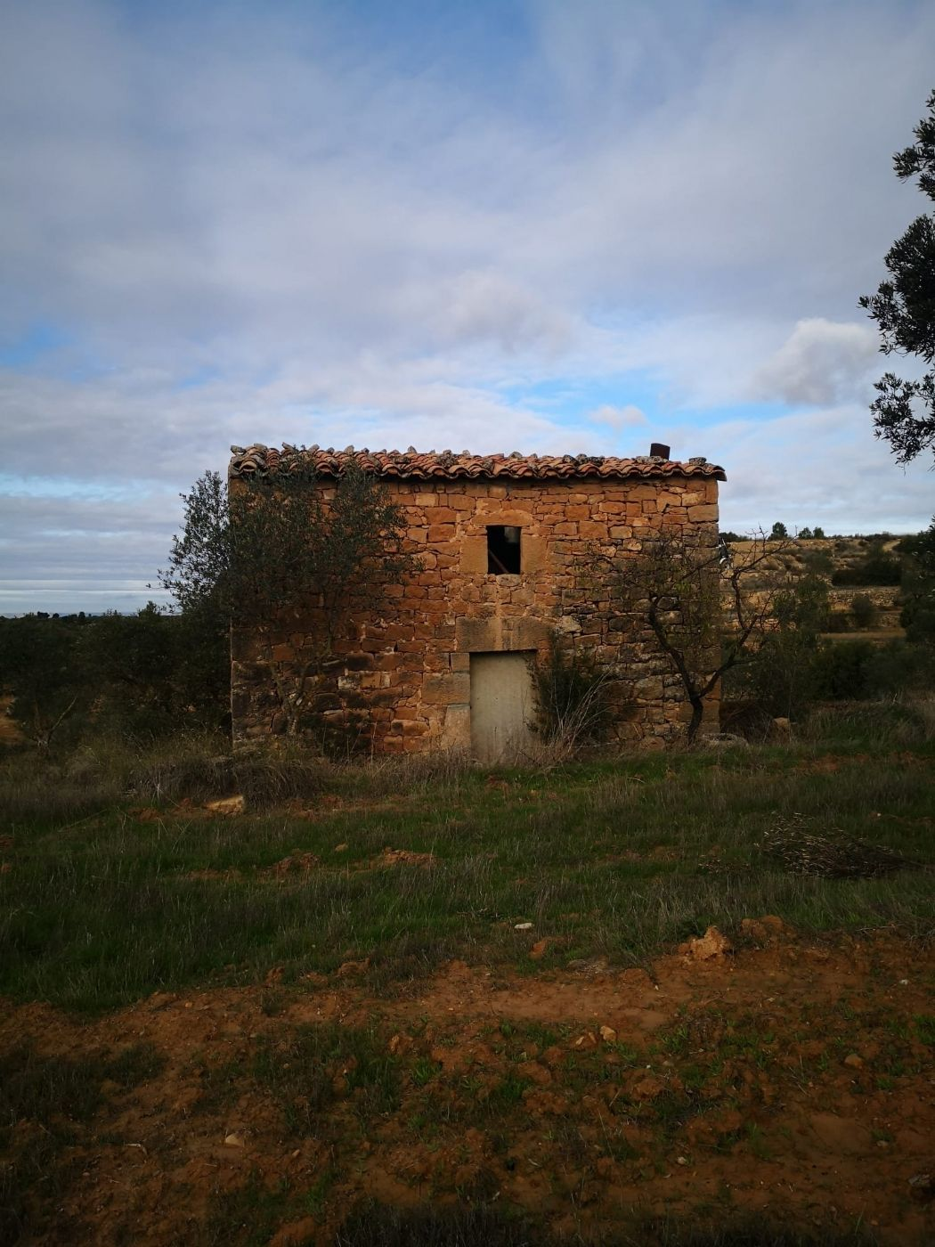 Rural plot in Carrer lleida, s/n. Terreno de 5,5 hectareas de olivos