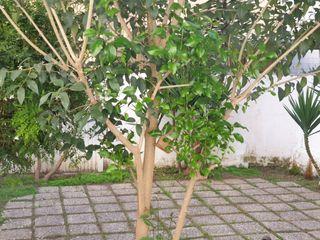 Rent Ground floor in La Gavarra. Oportunidad! piso con jardín!